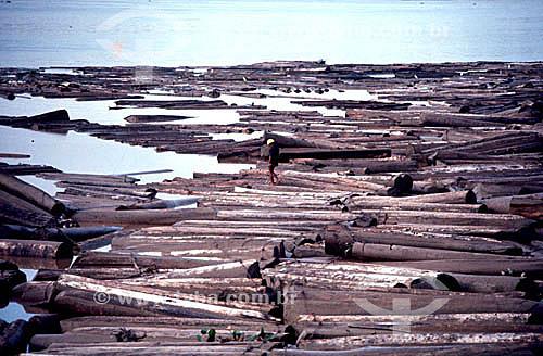 Troncos de árvores, comércio ilegal de madeira - AP - Brasil  - Amapá - Brasil