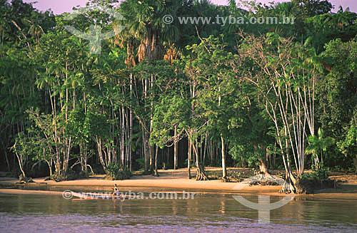 Praia do Rio Amazonas na Reserva Biológica da Fazendinha - Macapá - AP - Brasil - fevereiro de 2001.  - Macapá - Amapá - Brasil