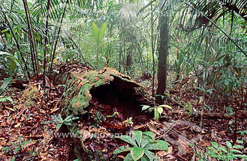 Árvores do Igapó, detalhe de folhas e tronco no chão - Floresta Amazônica