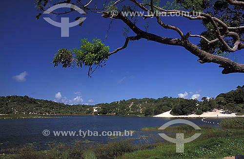 Tronco de árvore em primeiro plano  e Lagoa do Abaeté ao fundo - Salvador - Bahia - Brasil  - Salvador - Bahia - Brasil