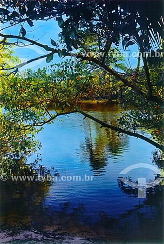 Paisagem - Mar azul entre árvores - Praia do Forte - Mata de São João - Linha Verde - Costa dos Coqueiros - norte da Bahia - Brasil  - Porto Seguro - Bahia - Brasil