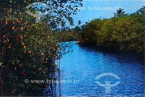 Paisagem - Mar azul entre árvores - Praia do Forte - Linha Verde - Costa dos Coqueiros - norte da Bahia - Brasil  - Porto Seguro - Bahia - Brasil