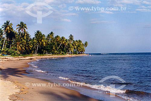 Praia do Forte - Mata de São João - Linha Verde - Costa dos Coqueiros - norte da Bahia - Brasil  - Porto Seguro - Bahia - Brasil