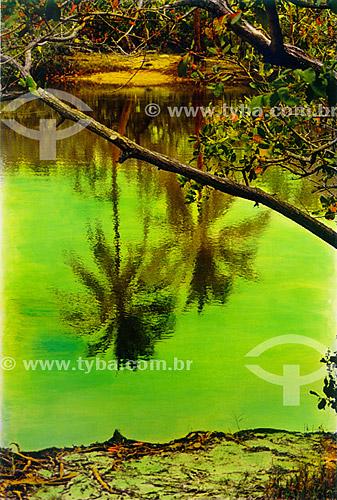 Paisagem - Coqueiros refletidos em água verde - Mata de São João - Linha Verde - Costa dos Coqueiros - norte da Bahia - Brasil  - Porto Seguro - Bahia - Brasil