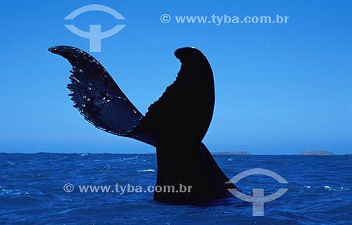 Cauda de Baleia Jubarte - Abrolhos  - Costa das Baleias - Costa das Baleias - litoral sul da Bahia - Brasil / Data: 2007  O Parque Nacional Marinho de Abrolhos foi criado em 6 de abril de 1983.