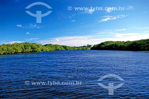 Mangue no rio Caraíva - Caraíva - Bahia - Brasil  - Porto Seguro - Bahia - Brasil