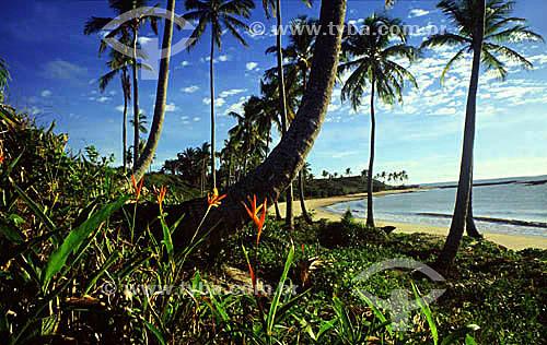 Ponta do Moreira, também conhecida como Praia dos Amores - Cumuruxatiba - litoral sul da Bahia - Brasil  / Data: 2010  A área denominada Costa do Descobrimento (Reserva da Mata Atlântica) é Patrimônio Mundial pela UNESCO desde 01-12-1999 e nela estão localizadas 23 áreas de proteção ambiental na Bahia (incluindo Porto Seguro).