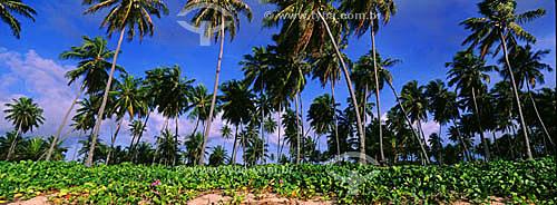 Coqueiros - Barra de São João - Linha Verde - Costa dos Coqueiros - norte da Bahia - Brasil  - Bahia - Brasil