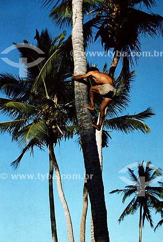 Homem subindo no coqueiro - Fortaleza - CE - Brasil  - Fortaleza - Ceará - Brasil