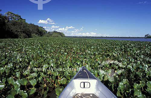 Aguapés - Parque Nacional de Ilha Grande - Paraná - Brasil - Abril de 2004  - Paraná - Brasil