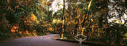 Estrada das Paineiras - Parque Nacional da Tijuca - Rio de Janeiro - RJ - Brasil  - Rio de Janeiro - Rio de Janeiro - Brasil