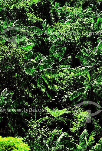Palmital - APA da Mantiqueira - Serrinha do Alambari - Resende - Sul Fluminense - RJ - Brasil  - Resende - Rio de Janeiro - Brasil