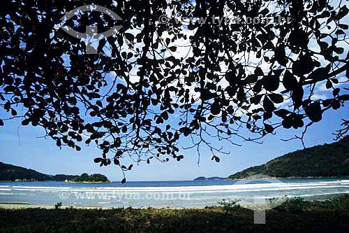 Praia em Angra dos Reis vista de dentro do mato - Praia de Dois Rios - Ilha Grande - Angra dos Reis - Rio de Janeiro - Brasil  - Angra dos Reis - Rio de Janeiro - Brasil