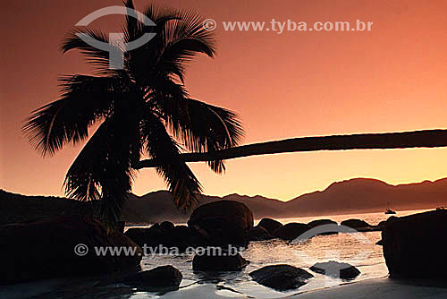 Assunto: Coqueiro Torto / Local: Vila de Aventureiro - Ilha Grande - APA dos Tamoios - Baía de Angra dos Reis - Costa Verde - RJ - Brasil