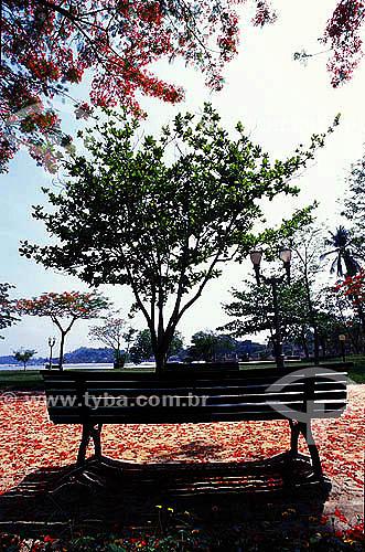 Banco de praça cercado por árvores no Parque Darke de Matos - Ilha de  Paquetá - Rio de Janeiro - RJ - Brasil  - Paquetá - Rio de Janeiro - Brasil