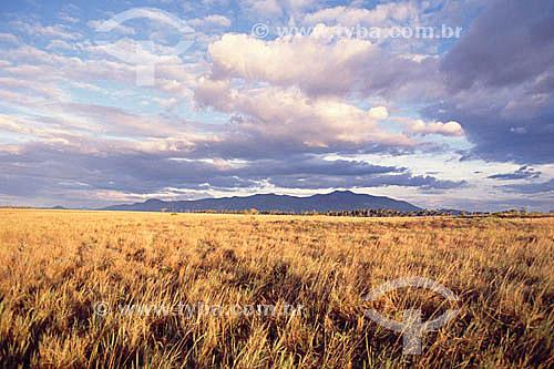 Campos com montanhas ao fundo - Roraima - Brasil / Data: 1996