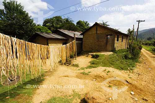 Fibras de bananeira secando ao Sol - Quilombo Ivaporunduva - vale do Ribeira - Eldorado - SP - Brasildata : abril 2006  - Eldorado - São Paulo - Brasil