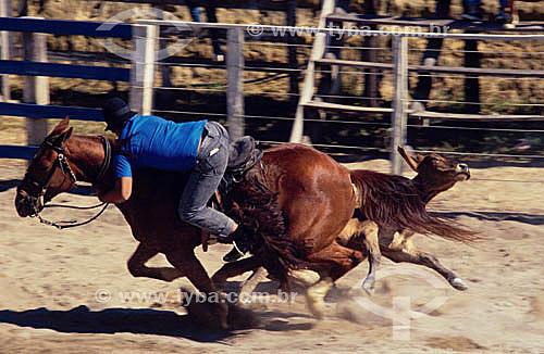 Vaquejada - Vaqueiro à cavalo dominando novilho