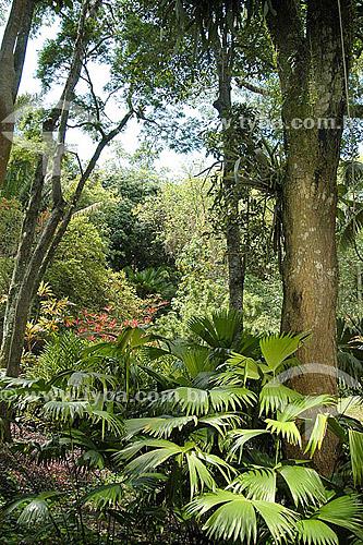 Assunto: Árvores no Sítio Roberto Burle Marx / Local: Barra de Guaratiba - Rio de Janeiro (RJ) - Brasil / Data: 05/2012