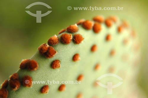 Detalhe de um Cactus