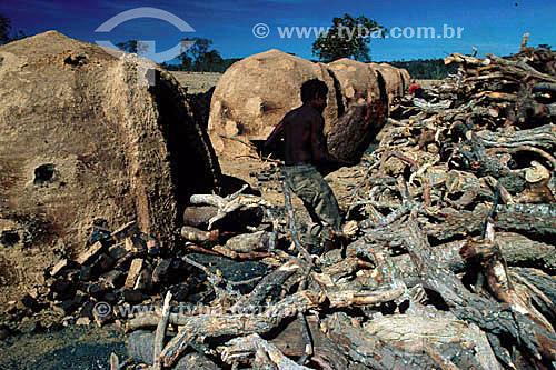 Carvoeiro e lenha para uso em fornos de carvão, um dos fatores de destruição das matas no Brasil