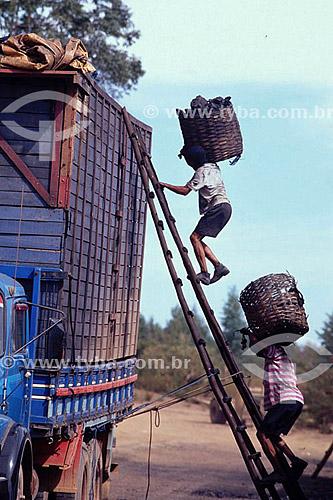 Carvoeiros carregando cestos cheios de carvão - Vale do Jequitinhonha - MG - Brasil / 2007  - Minas Gerais - Brasil