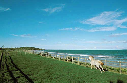 Cavalo branco galopando em terreno com cerca em frente ao mar - Hotel Toca do Marlin  - Santo André - Bahia - Brasil