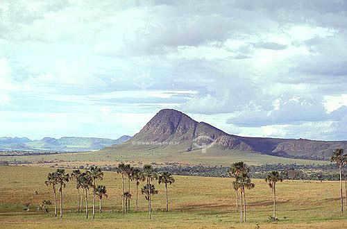 Campo limpo e Vereda com Buritis - Cerrado - Brasil
