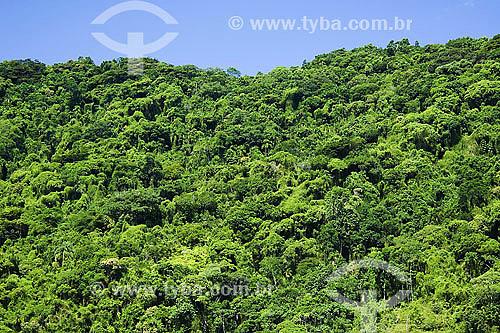 Paisagem de Mata Atlantica - Picinguaba - Ubatuba - SP - Brasil - abril 2007  - São Paulo - Brasil