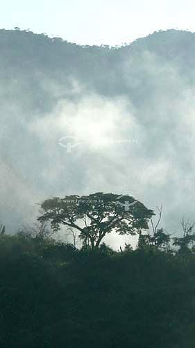 Neblina na Mata Atlântica ao amanhecerAbr/2007 - RJ - Brasil  - Rio de Janeiro - Brasil