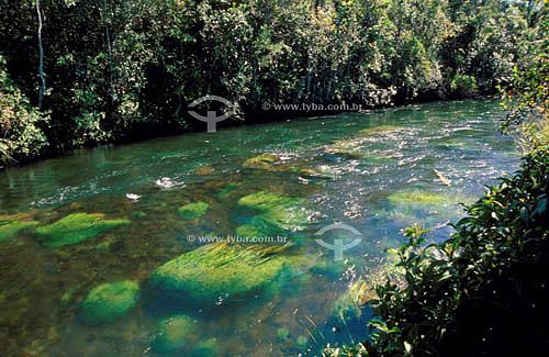 Rio Formoso - Parque Nacional das Emas  - Goiás - vegetação de Cerrado - Brasil / Data: 2008  O Parque é Patrimônio Mundial pela UNESCO desde 16-12-2001.