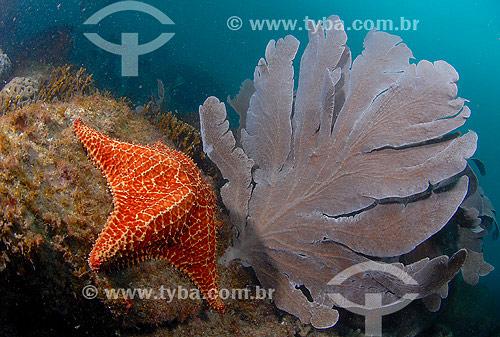 Estrela-do-mar e Gorgônia - Cabo Frio - RJ - Brasil - 2007  - Cabo Frio - Rio de Janeiro - Brasil
