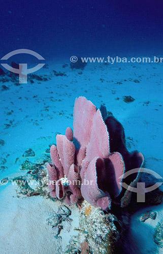 Esponja do mar / Abrolhos - Bahia / Data: 2007