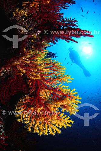 Gorgônia e mergulhador - Ilhas Medas - Espanha