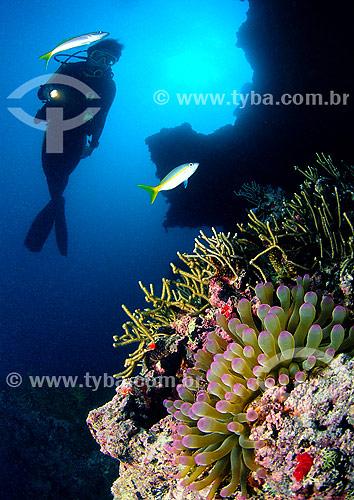 Assunto: Anêmona e mergulhador / Local: Abrólhos (BA) - Brasil / Data: 04/2011