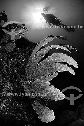 Leque-do-mar (coral gorgoniano) e mergulhadora em Cabo Frio - RJ - Brasil  - Cabo Frio - Rio de Janeiro - Brasil