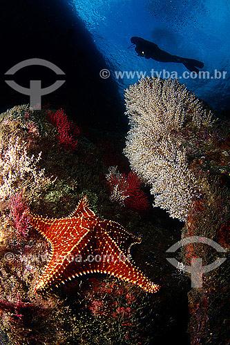 Paisagem sub-aquática de Angra dos Reis - RJ - Brasil  - Angra dos Reis - Rio de Janeiro - Brasil
