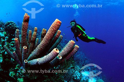 Esponja (Aplysina archery) e mergulhadora - Bonaire  / Data: 2008