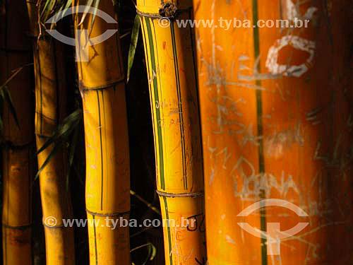 Troncos de bambu pixados