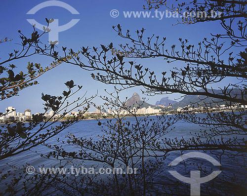 detalhe de árvores na orla da Lagoa Rodrigo de Freitas com Morro Dois Irmãos e Pedra da Gávea ao fundo - Rio de Janeiro - RJ - Brasil - 2006  - Rio de Janeiro - Rio de Janeiro - Brasil