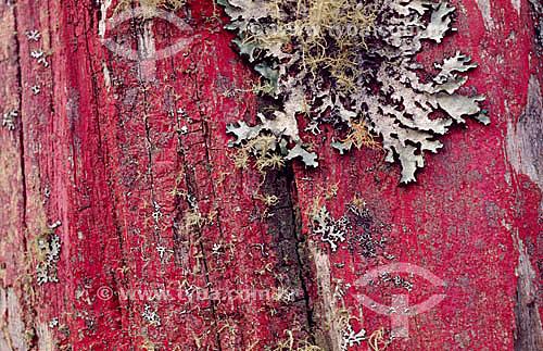 Close-up de tronco de árvore com liquens