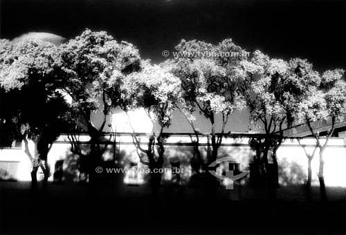 Árvore da Saudade  - Rio de Janeiro - Brasil