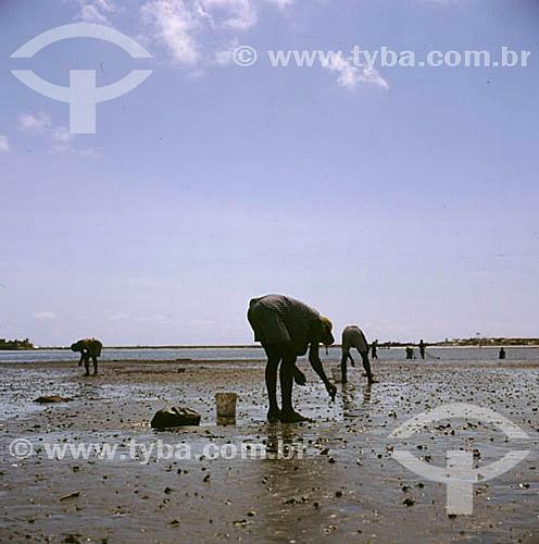 Assunto: Homens pegando caranguejos / Local: Recife - Pernambuco (PE) - Brasil / Data: 2005