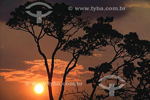 Pôr-do-sol entre árvores no Distrito Federal - Brasil  - Brasília - Distrito Federal - Brasil
