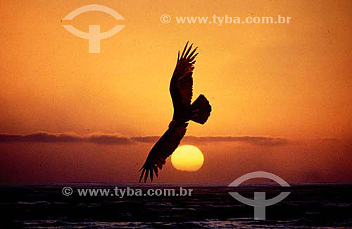 Pássaro e sol