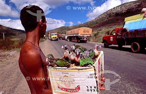 Venda ilegal de animais silvestres (araras) na estrada - Interior da Bahia - Próximo a Jequié - 1996 - Tráfico de animais  - Jequié - Bahia - Brasil
