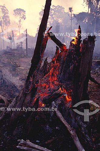 Assunto: Queimada  -  Desmatamento na floresta Amazônical  / Local: Amazônia - Brasil / Data: 1996