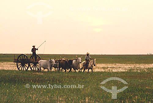 Pantaneiros com carroça puxada por bois - Pantanal Matogrossense  - MT - Brasil / 2003  A área é Patrimônio Mundial pela UNESCO desde 2000.  - Mato Grosso - Brasil