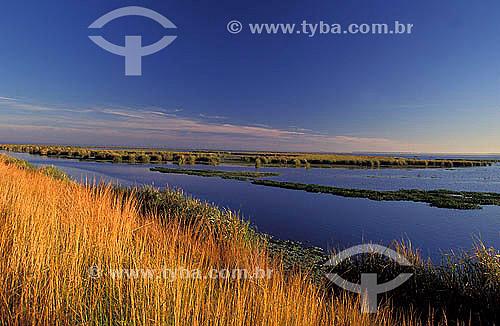 Banhado do Taim - Área de inundação com grande diversidade de vida selvagem - Rio Grande do Sul - Brasil  - Rio Grande do Sul - Brasil