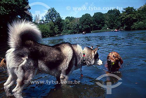 Cachorros no Central Park - Nova York - NY - Estados Unidos